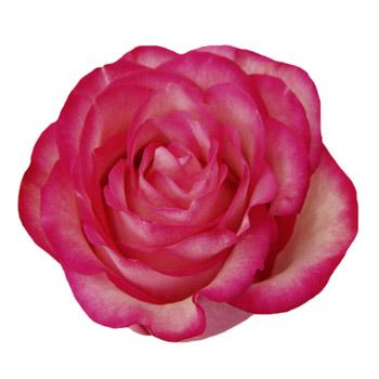 Global Flower Roses